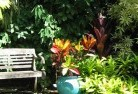 Abercorn Tropical landscaping 11