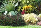 Abercorn Tropical landscaping 9